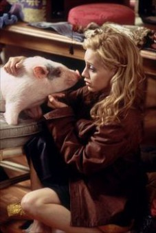 2770f633f1b75a4ac4a5867076b3166f--uptown-girls-movie-pot-belly-pigs